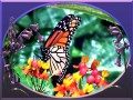 Monarch Butterfly ~ A Generational Expedition