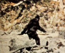 Big Foot?  Man in ape suit?  What do YOU think?