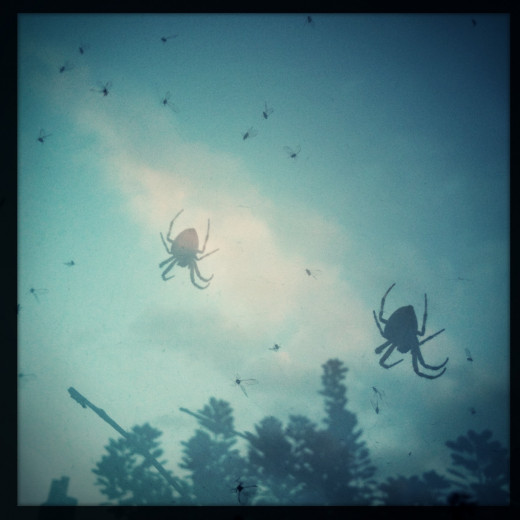 Spiders and Flies - taken with multi-exposure