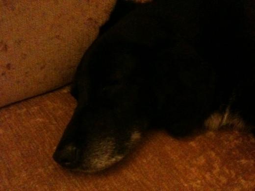 Sleep tight Puppy
