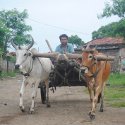 kkumar profile image