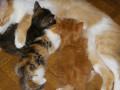 Free Short Stories Online:  Adopting a Cat