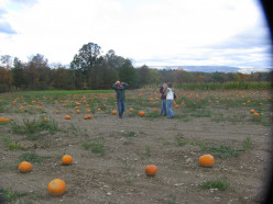 Pumpkin Picking, Autumn,and The World's Largest Gnome (with photos)