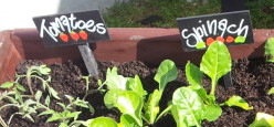 Top 10 Vegetables to Grow at Home