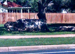 Boulders big enough to rest on while recuperating from a run.