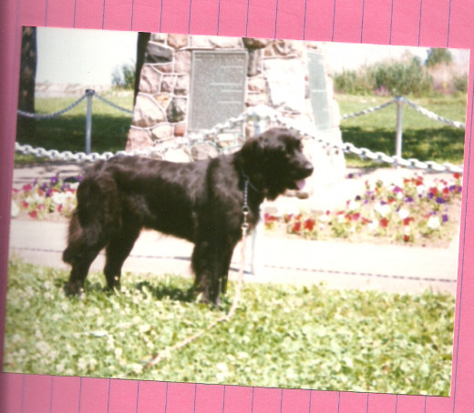 "Ebony (1998-2009) as a young, under-ruffed ""pup"" posed at Port Clinton. (Photo by Barbara Anne Helberg, 1998)"