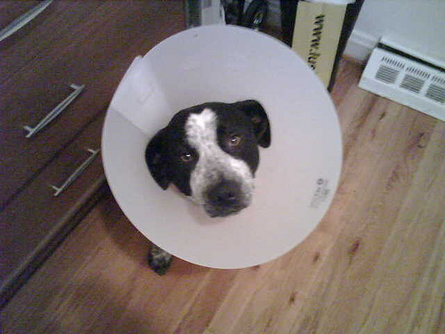 ELIZABETHAN COLLAR, A.K.A. E-COLLAR AND HEAD CONE