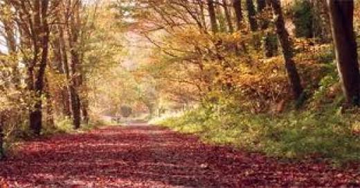 Derwenthaugh Park pathway