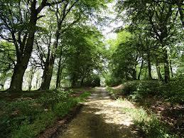 Greencroft Woodlands