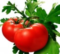 Health Benefits Tomatoes - Nutritional Facts, Uses and Remedies