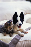 Stress Relief Benefits of Owning a Dog or Cat