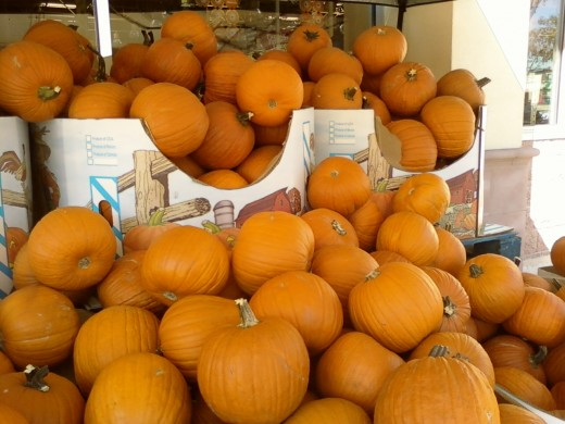 A huge batch of pumpkins