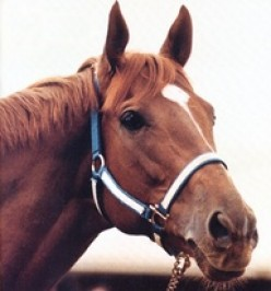 Horse Races in Heaven