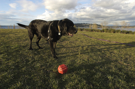 Toys that engage instinctive behaviors may be suitable alternatives for some diggety dogs.