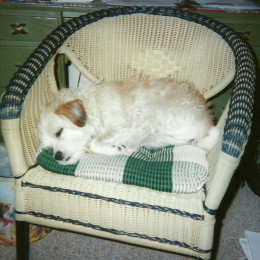 """When Mom's on the computer, Cee-Cee is in her """"desk"""" chair. (Photo by Barbara Anne Helberg, 2012)"""