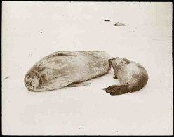 How to Help Save Wild Seals