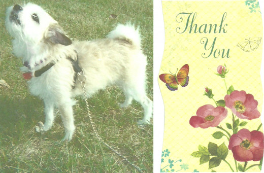 Cee-Cee and I used this note to thank voters and others who supported the Pet Parade Contest 2012. (Photo by Barbara Anne Helberg, 2010)