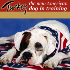 Turkey the new American dog in training