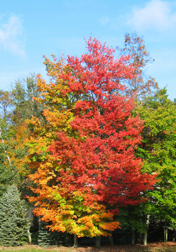 Cleveland's Fall Colors