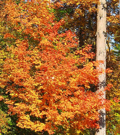 Vivid orange-yellow