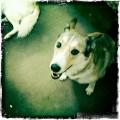 How to Help Prevent Dog Flatulence