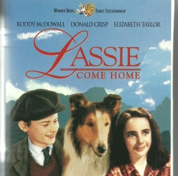 """More fictional, more fanciful, """"Lassie Come Home"""", starring Roddy McDowall, Donald Crisp, and Elizabeth Taylor, nonetheless dwelled on the richness of family life, the loyal  togetherness of a dog and his people."""