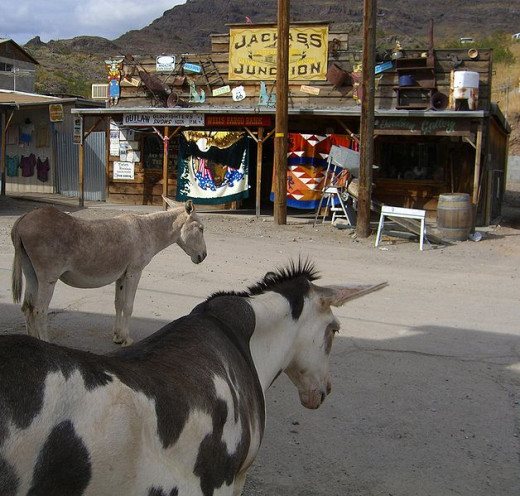 "The fascinating little ghost town of Oatman, Arizona and its famous ""visitors"" ~ The burros that make their way into the town every day to find attention and handouts of food!"