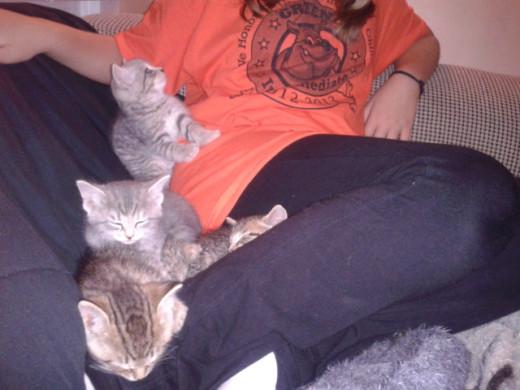 Pile of kittens!