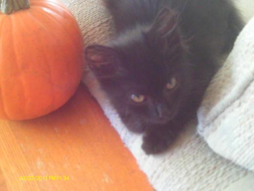 This is our new kitten:  Taz short for Tazmanian Devil