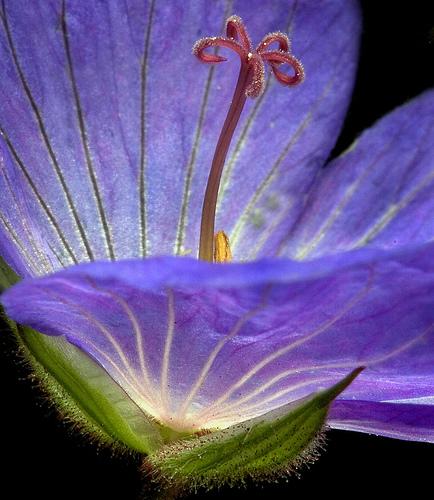 Enlightenment from DARREN STONE Source: flickr.com