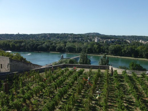 Vineyards in the city of Avignon