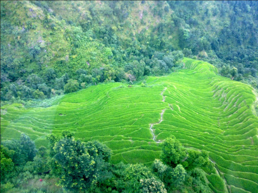 Rice field as seen from the cable car
