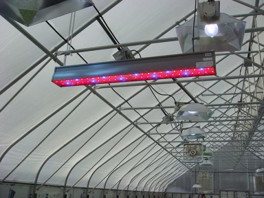 High-tech LED Grow Lights