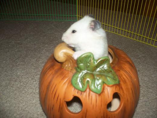 "Mimi says, ""Happy Halloween!"""
