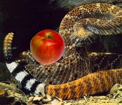 The snake learnt to coil its tail around apples and to carry them.
