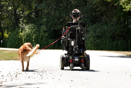 Service dogs perform all kinds of functions for people with disabilities.