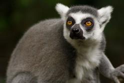 Rainforest's Endangered Monkeys