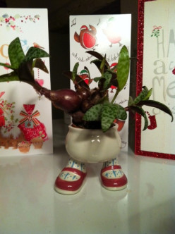 What Christmas flower arrangements to you put up?  Do you make them or buy them?