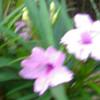 rejni profile image