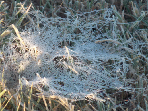 Frosted Ground Spider Web