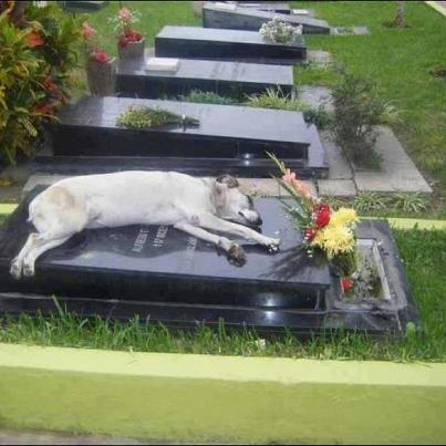 """For the past 6 years, a German shepherd called Capitán has slept next to the grave of his owner every night at 6pm. His owner, Miguel Guzmán died in 2006."" From a FaceBook Post."