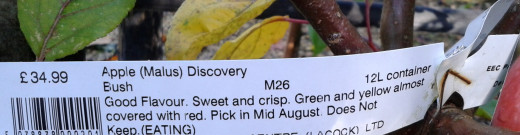 Apple Tree label with rootstock indicated in the centre - M27
