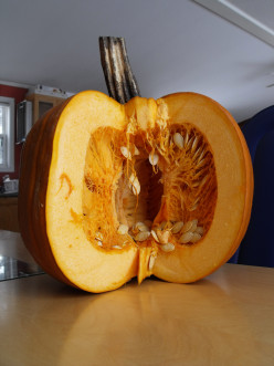 Get creative with pumpkin