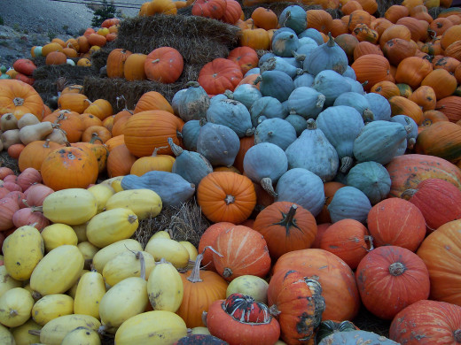 Pumpkins come in so many different shapes and colours