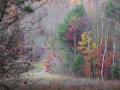 A Walk in My Autumn Woods in New York State