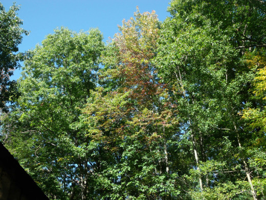 Some trees are just beginning to show color, while others are still green.