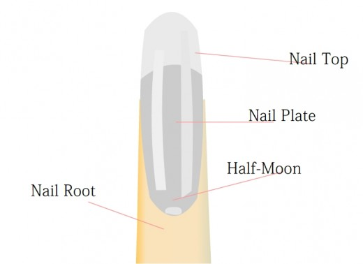 The Nail Structure