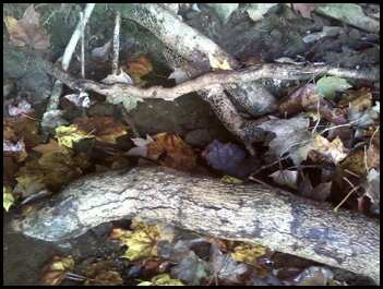 Tree roots above ground.  Mantle Rock, Kentucky