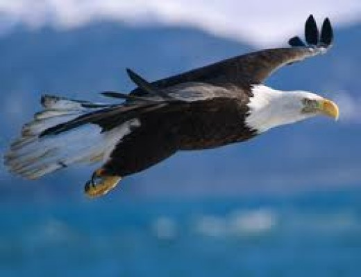 Set your inner eagle free