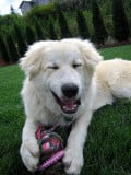 Pet Toys and Treats As Environmental Enrichment Options